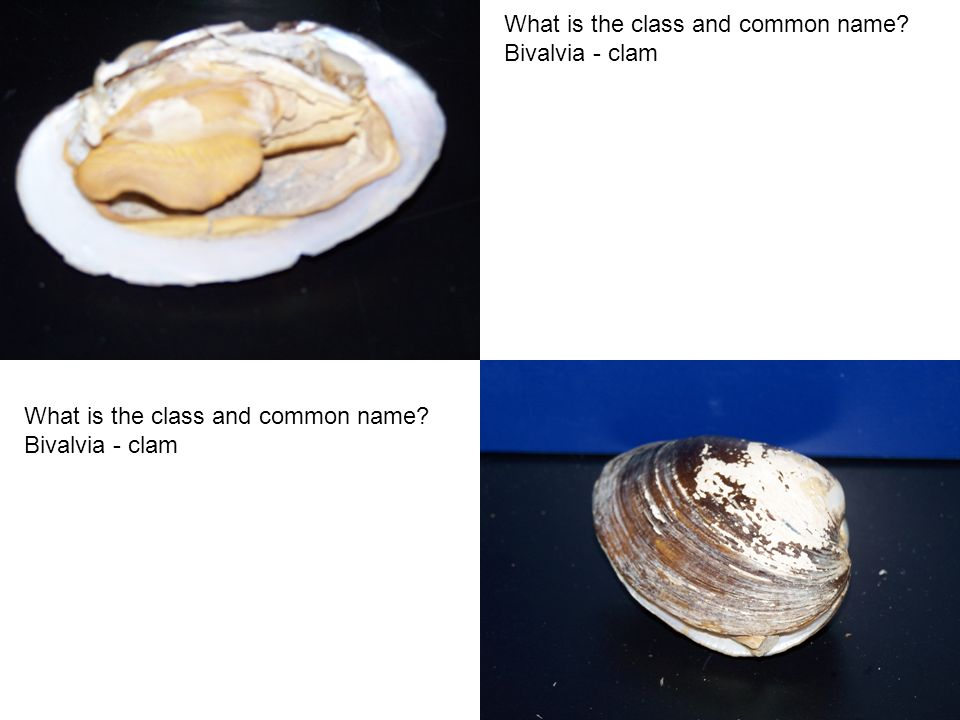 What is the class and common name