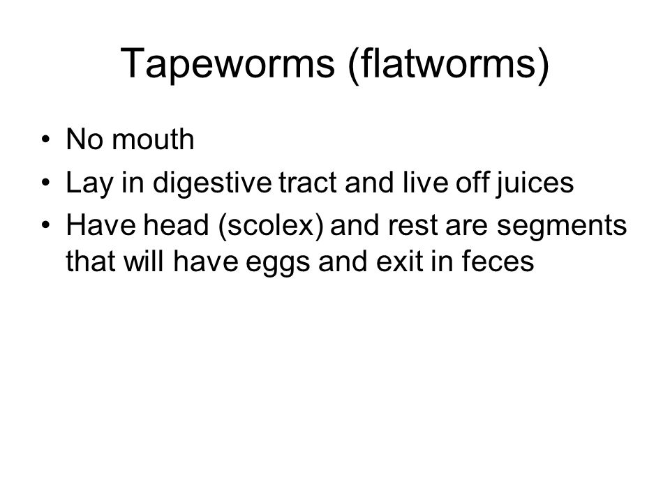 Tapeworms (flatworms)