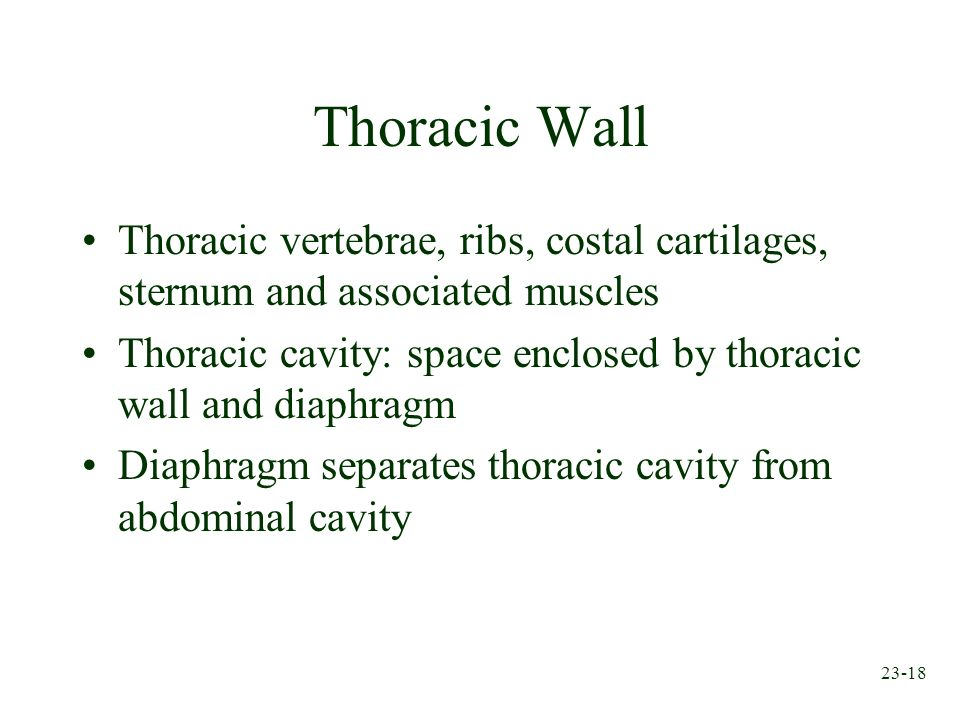 Thoracic Wall Thoracic vertebrae, ribs, costal cartilages, sternum and associated muscles.