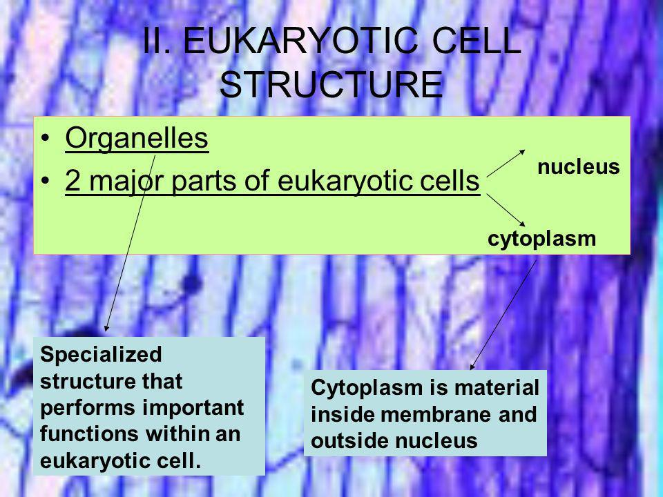 II. EUKARYOTIC CELL STRUCTURE