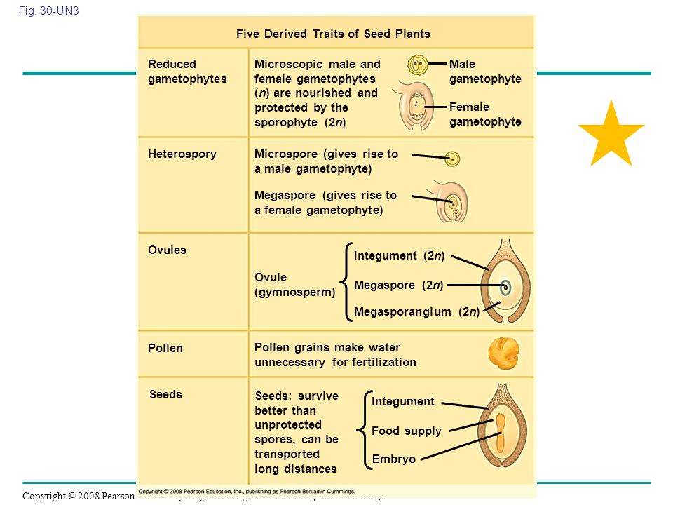 Five Derived Traits of Seed Plants