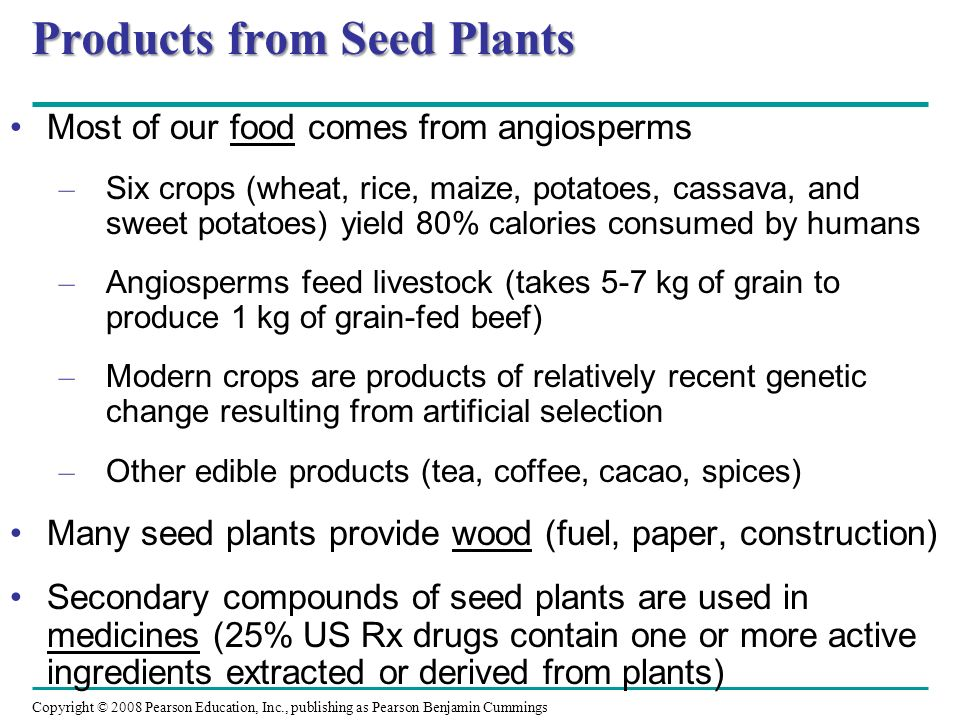 Products from Seed Plants