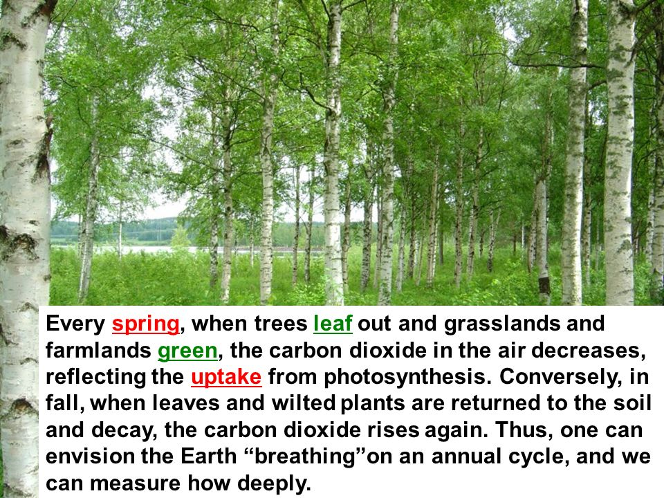 Every spring, when trees leaf out and grasslands and farmlands green, the carbon dioxide in the air decreases, reflecting the uptake from photosynthesis.