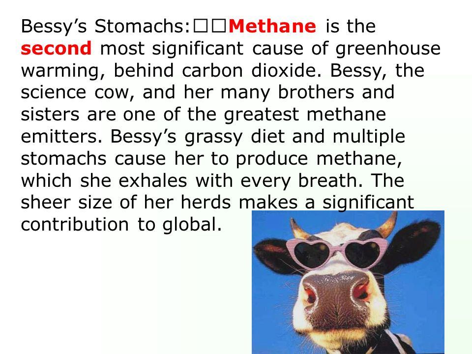 Bessy's Stomachs: Methane is the second most significant cause of greenhouse warming, behind carbon dioxide.