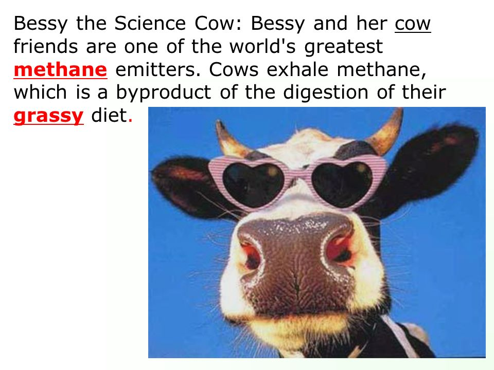 Bessy the Science Cow: Bessy and her cow friends are one of the world s greatest methane emitters.