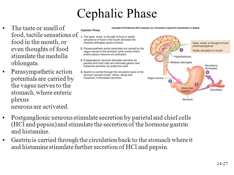 Cephalic Phase The taste or smell of food, tactile sensations of food in the mouth, or even thoughts of food stimulate the medulla oblongata.