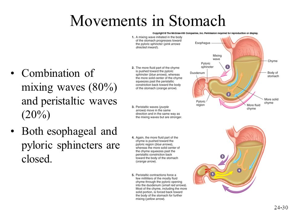 Movements in Stomach Combination of mixing waves (80%) and peristaltic waves (20%) Both esophageal and pyloric sphincters are closed.