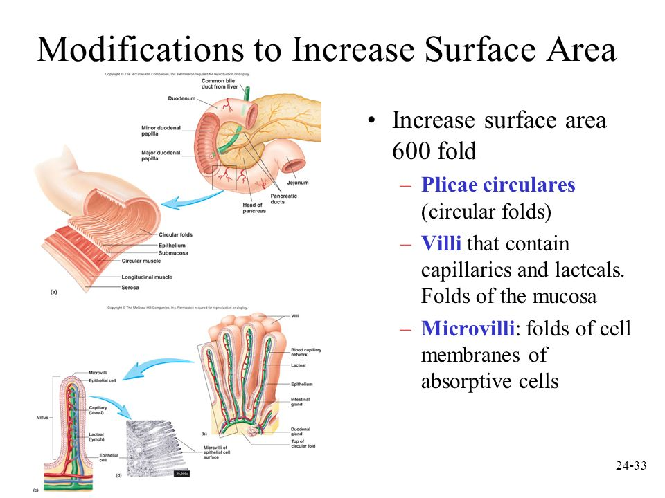 Modifications to Increase Surface Area