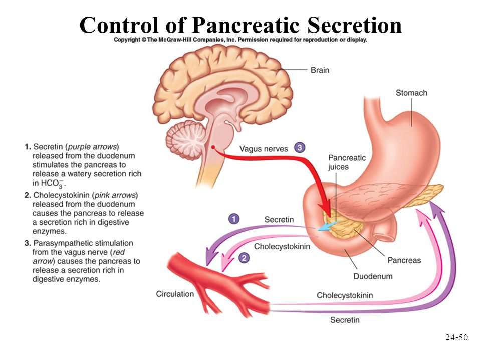 Control of Pancreatic Secretion