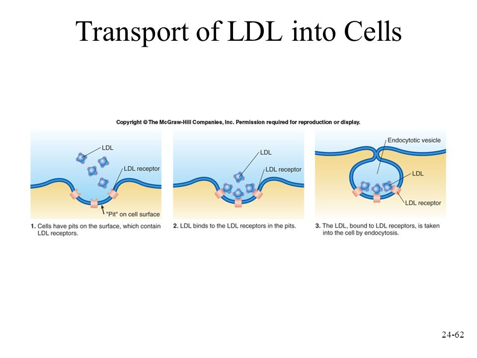 Transport of LDL into Cells