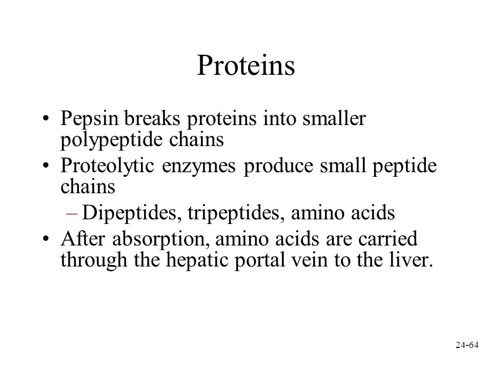 Proteins Pepsin breaks proteins into smaller polypeptide chains