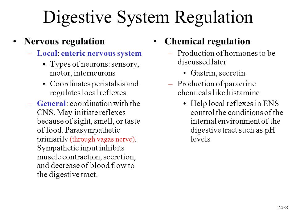 Digestive System Regulation