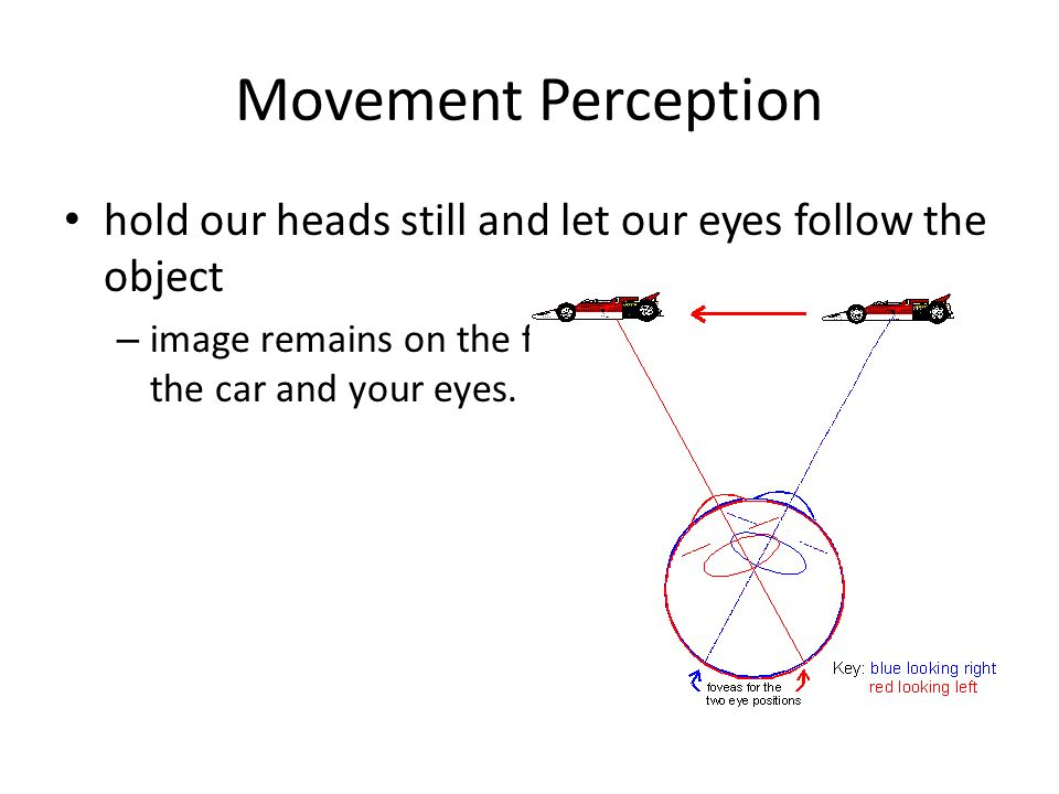 Movement Perception hold our heads still and let our eyes follow the object.
