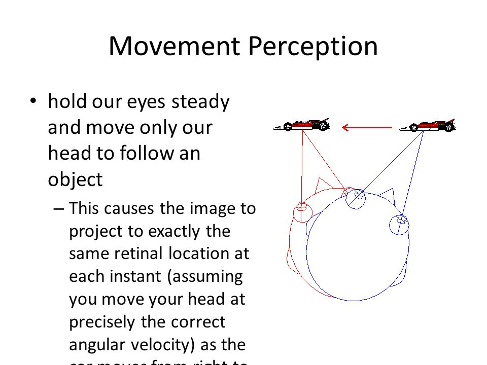 Movement Perception hold our eyes steady and move only our head to follow an object.