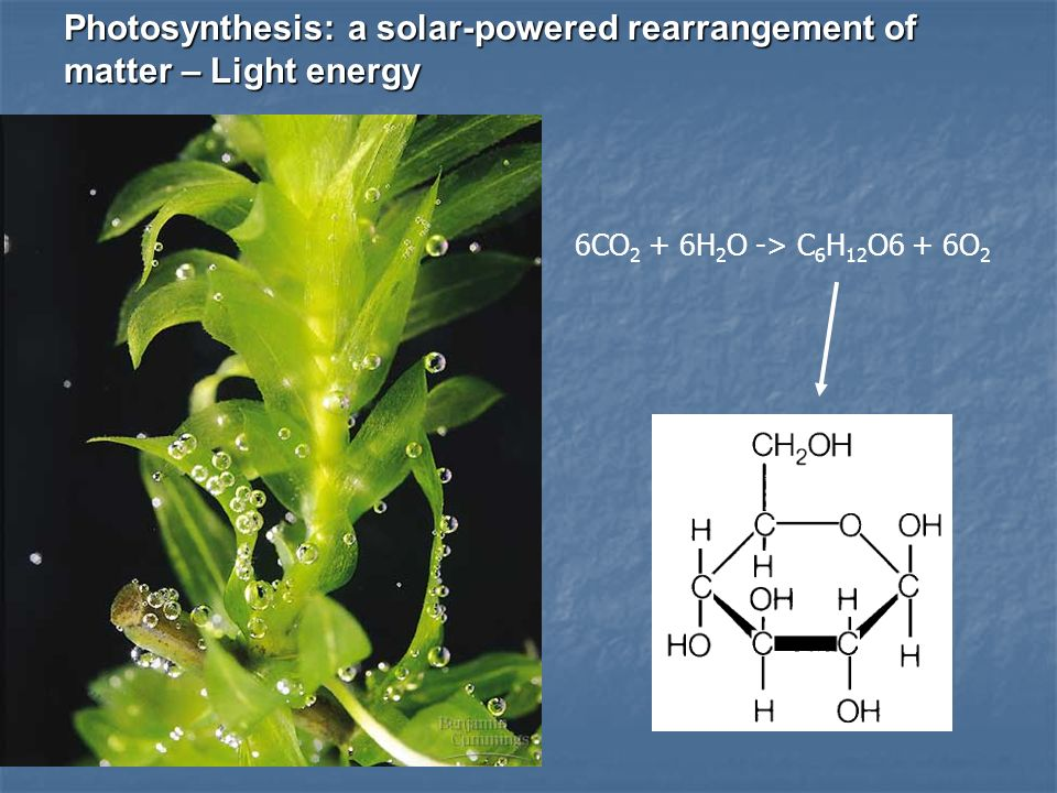 Photosynthesis: a solar-powered rearrangement of matter – Light energy