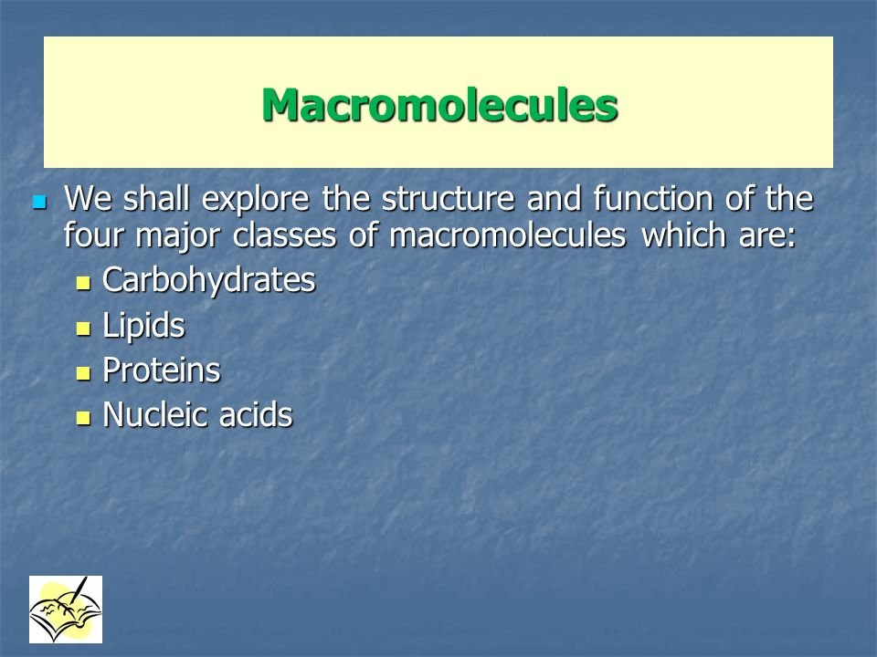 Macromolecules We shall explore the structure and function of the four major classes of macromolecules which are: