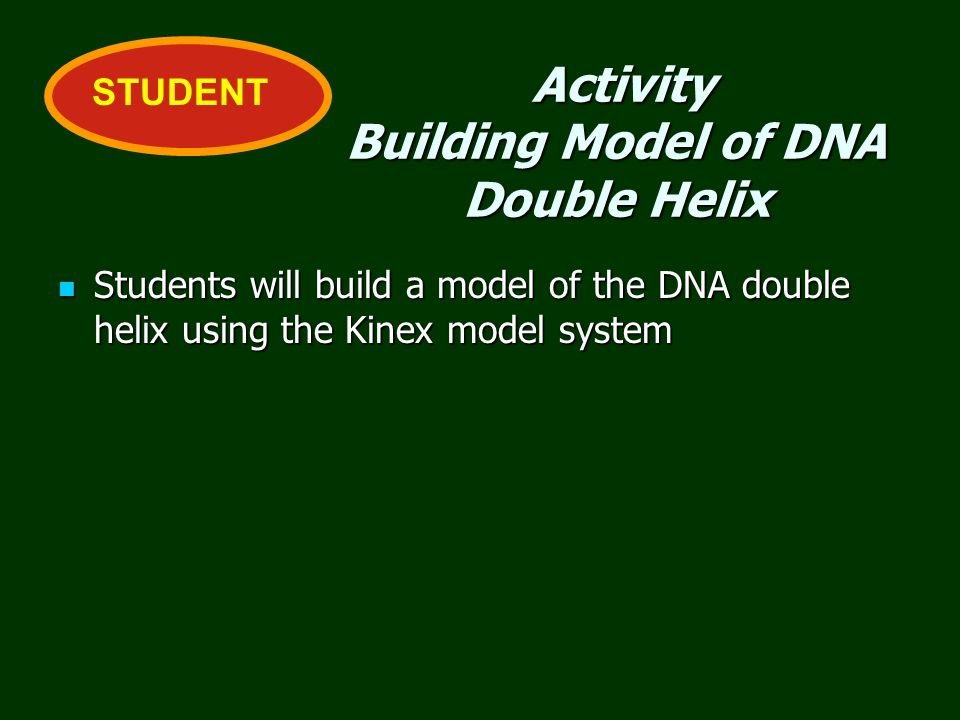 Activity Building Model of DNA Double Helix