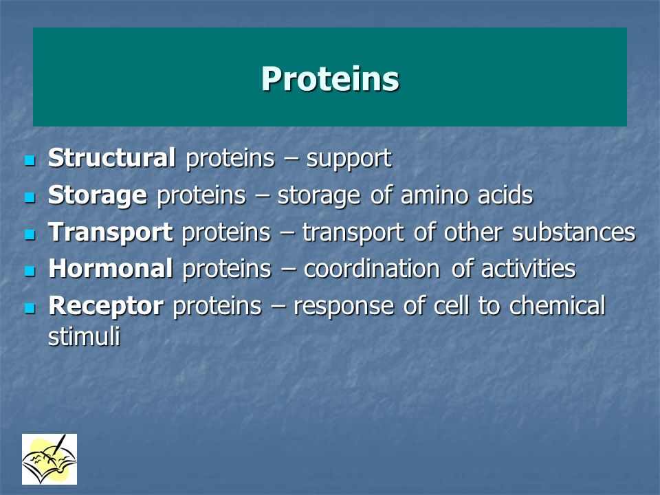 Proteins Structural proteins – support