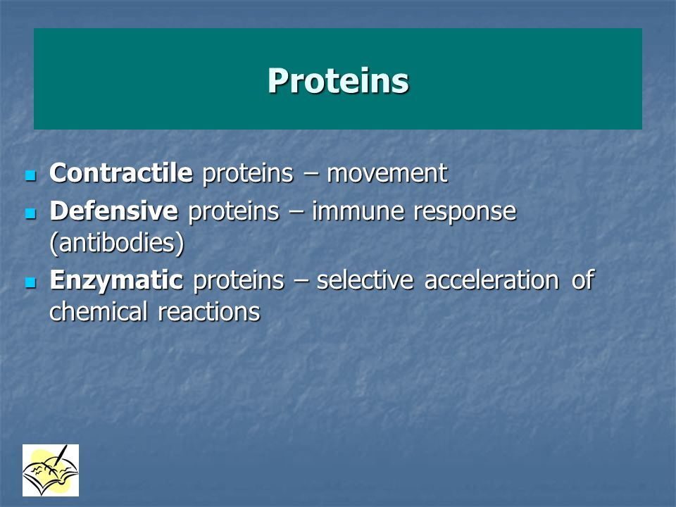 Proteins Contractile proteins – movement
