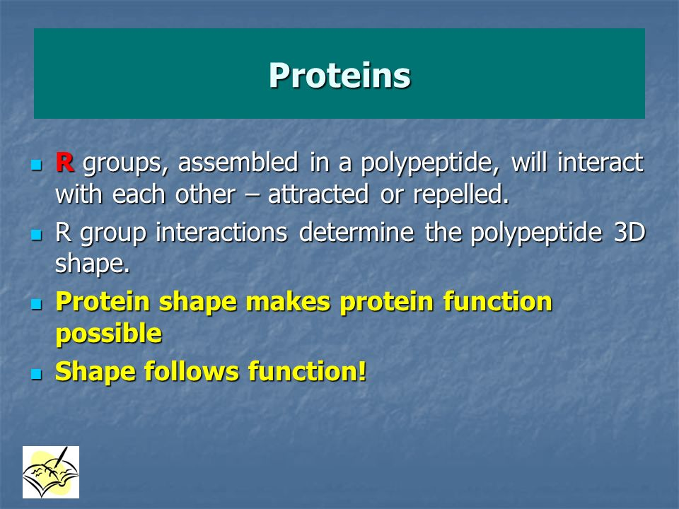 Proteins R groups, assembled in a polypeptide, will interact with each other – attracted or repelled.