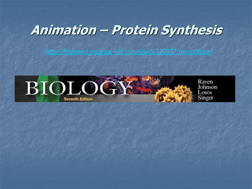 Animation – Protein Synthesis