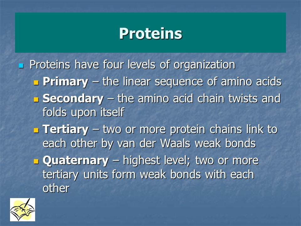 Proteins Proteins have four levels of organization