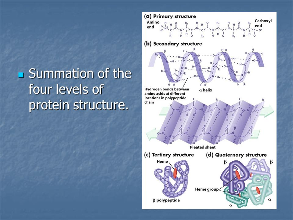Summation of the four levels of protein structure.