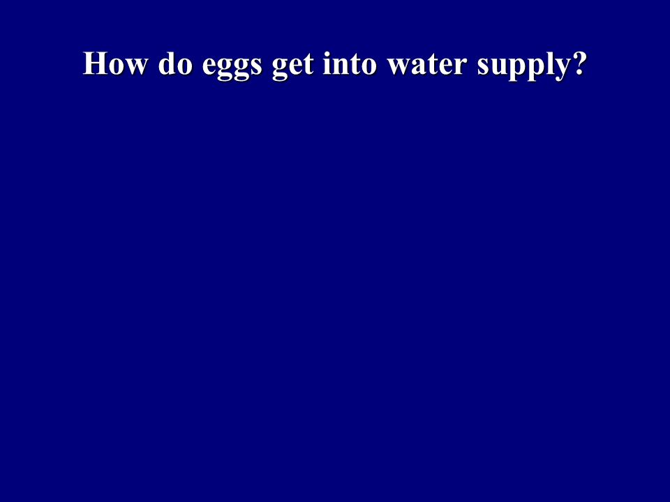 How do eggs get into water supply