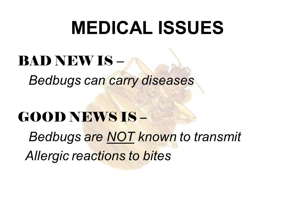 MEDICAL ISSUES BAD NEW IS – Bedbugs can carry diseases GOOD NEWS IS –