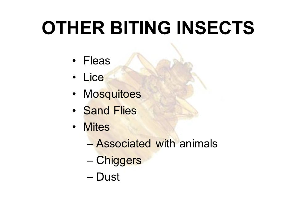 OTHER BITING INSECTS Fleas Lice Mosquitoes Sand Flies Mites