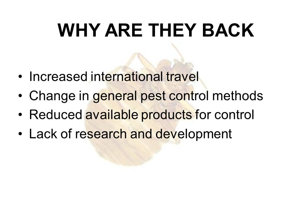 WHY ARE THEY BACK Increased international travel