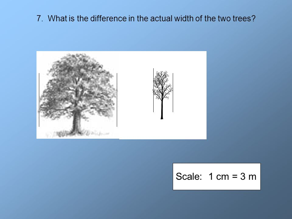 7. What is the difference in the actual width of the two trees