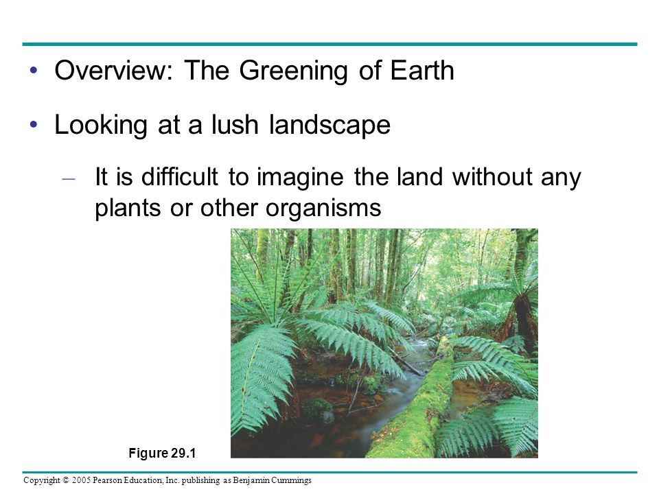 Overview: The Greening of Earth Looking at a lush landscape