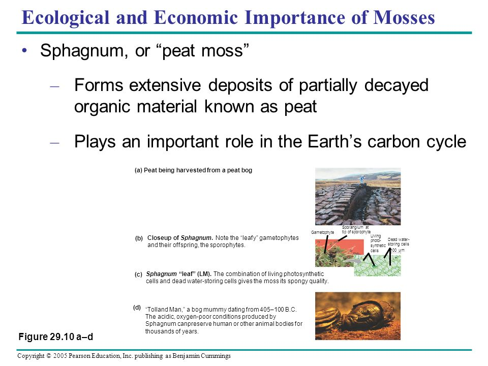 Ecological and Economic Importance of Mosses