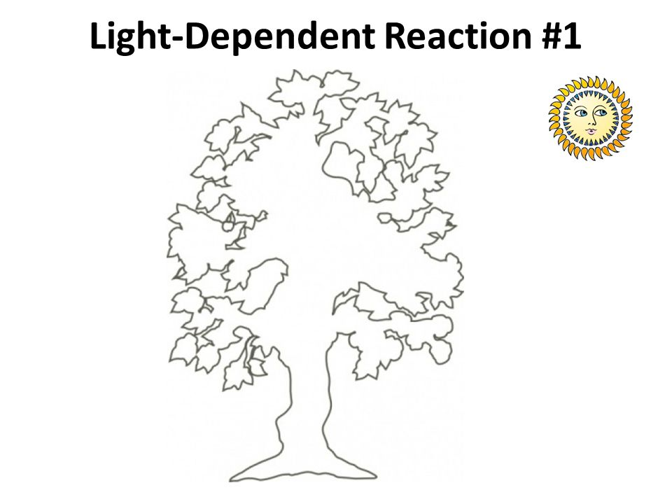 Light-Dependent Reaction #1
