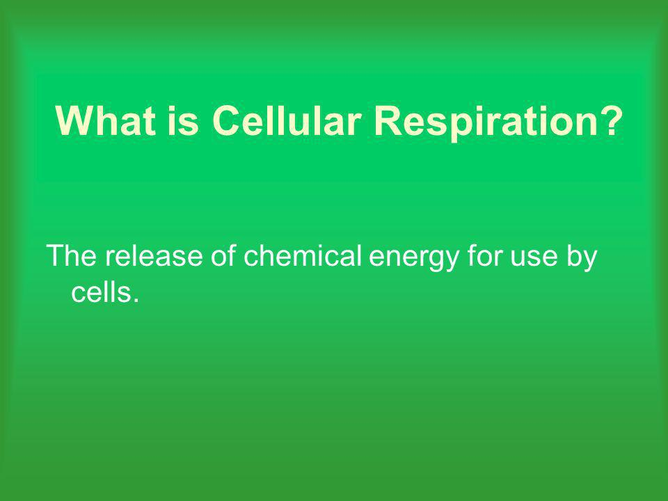 What is Cellular Respiration