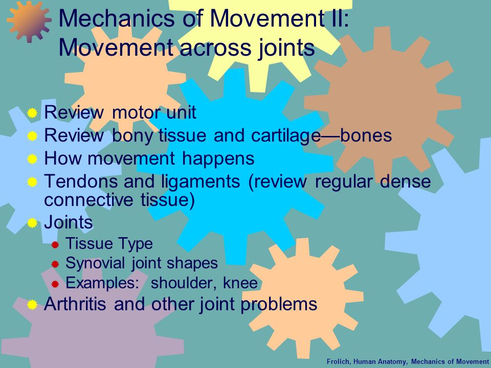 Frolich, Human Anatomy, Mechanics of Movement