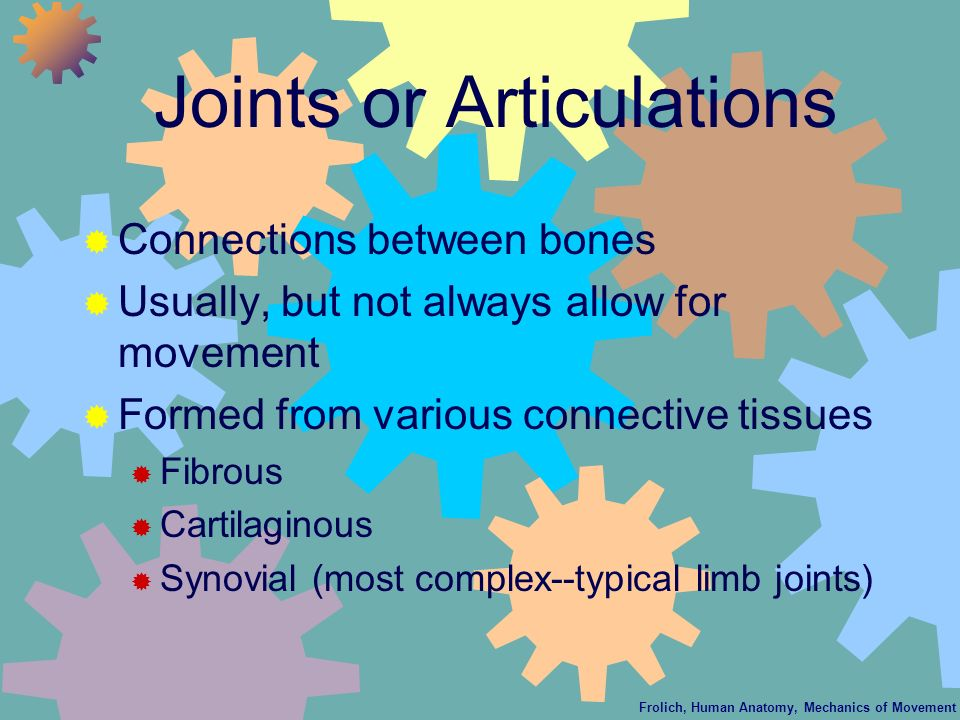Joints or Articulations