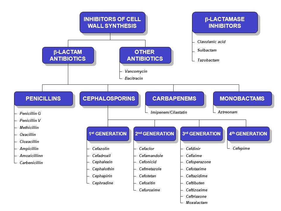 INHIBITORS OF CELL WALL SYNTHESIS -LACTAMASE INHIBITORS -LACTAM