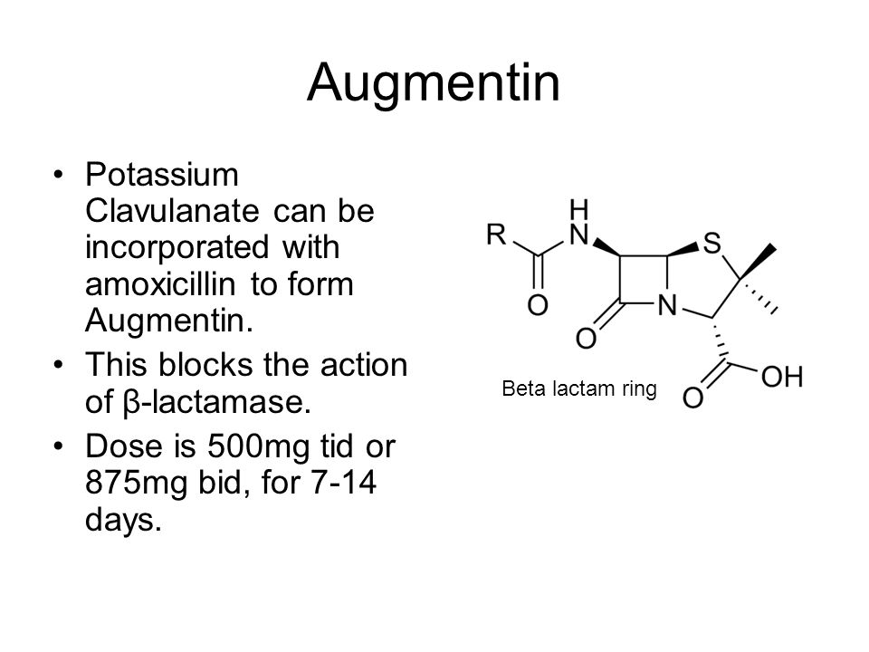 Augmentin Potassium Clavulanate can be incorporated with amoxicillin to form Augmentin. This blocks the action of β-lactamase.