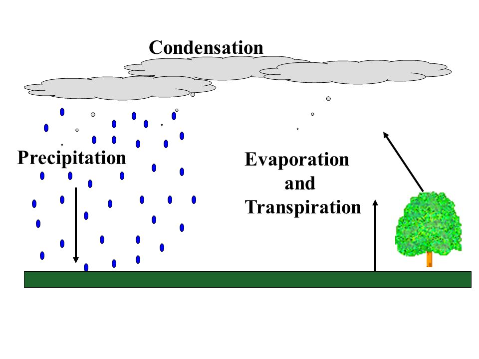 Condensation Precipitation Evaporation and Transpiration