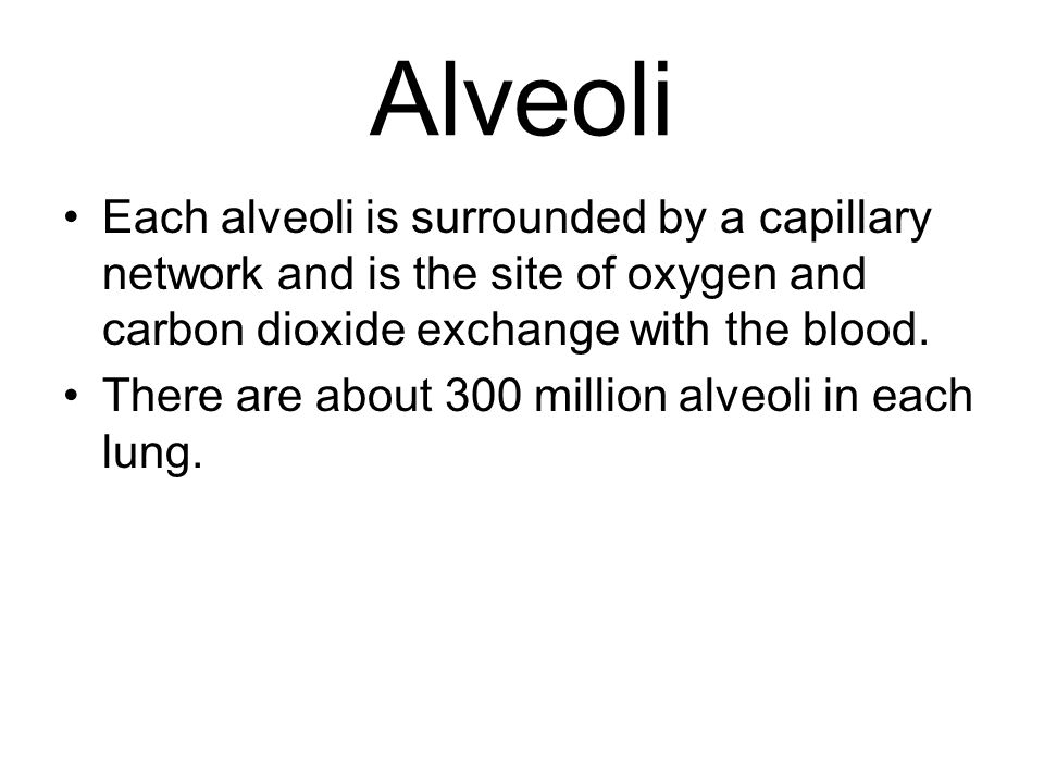 Alveoli Each alveoli is surrounded by a capillary network and is the site of oxygen and carbon dioxide exchange with the blood.