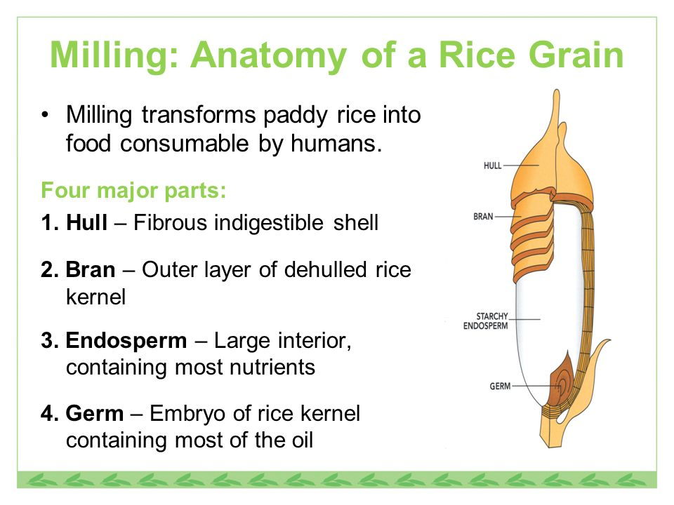 Milling: Anatomy of a Rice Grain