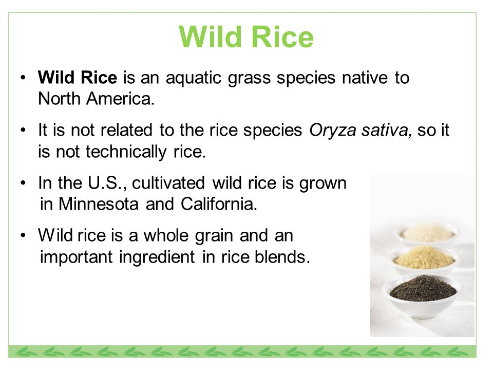 Wild Rice Wild Rice is an aquatic grass species native to North America.