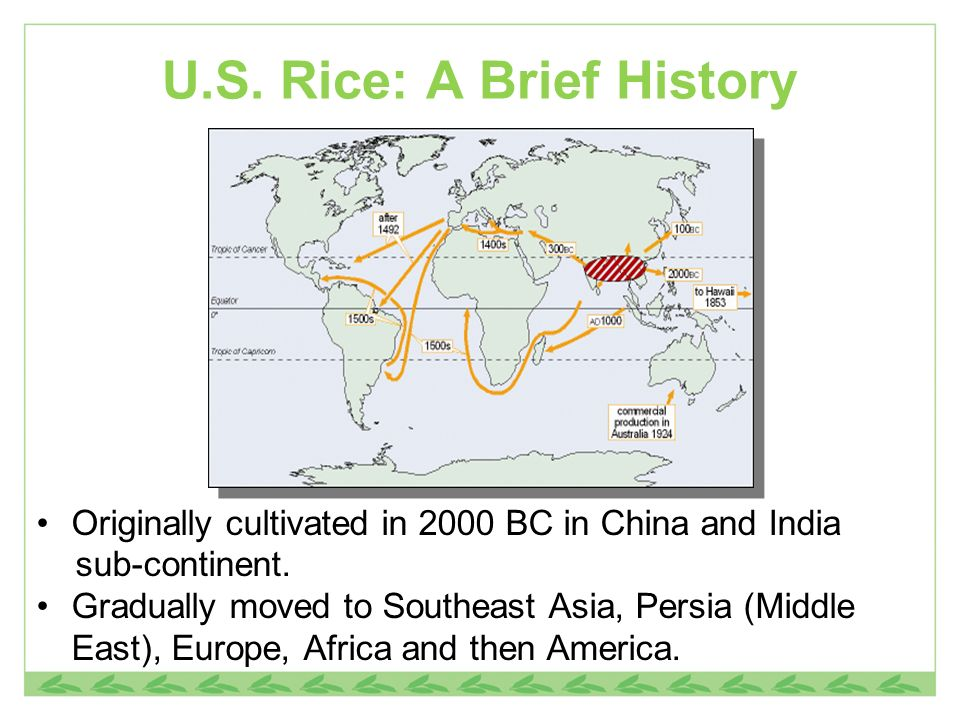 U.S. Rice: A Brief History