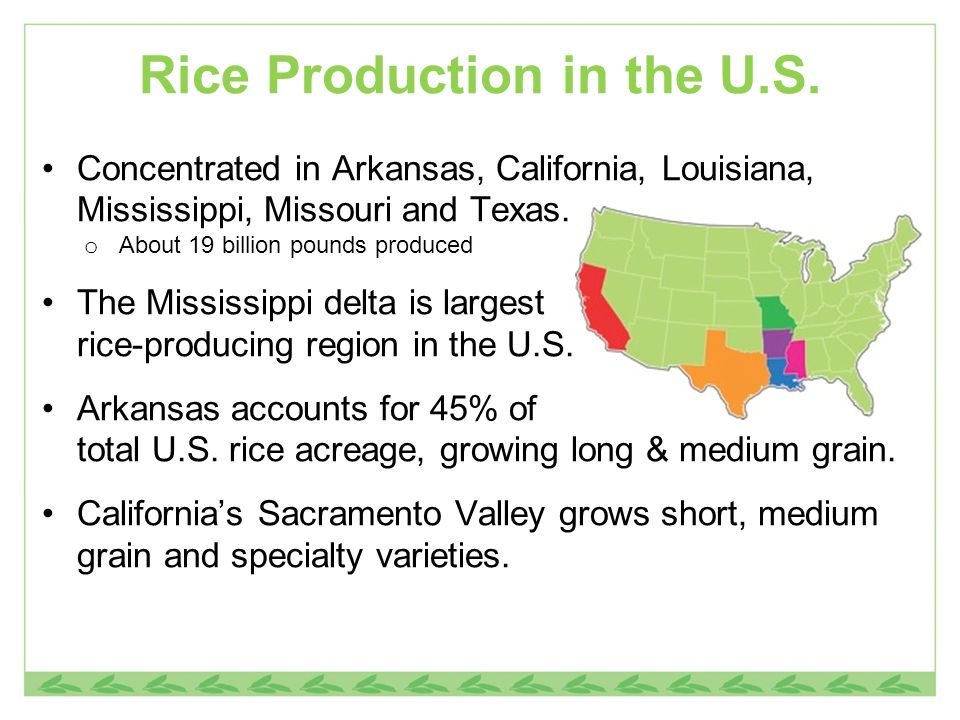 Rice Production in the U.S.