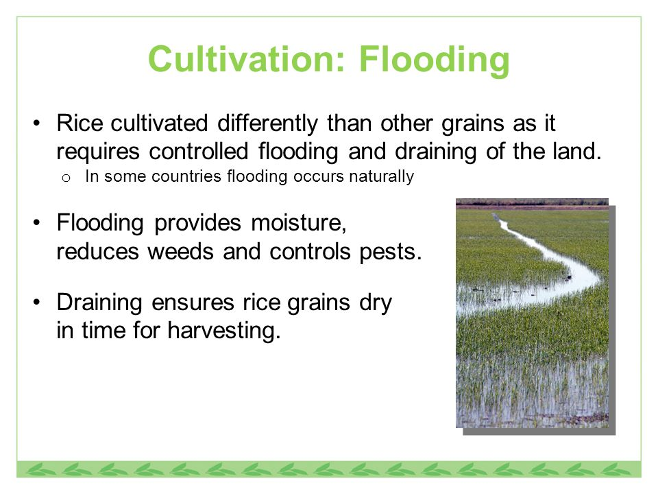 Cultivation: Flooding