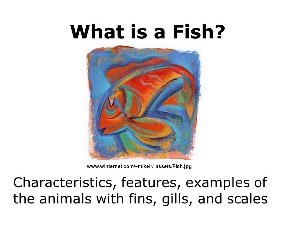 What is a Fish. www.winternet.com/~mikelr/ assets/Fish.jpg.