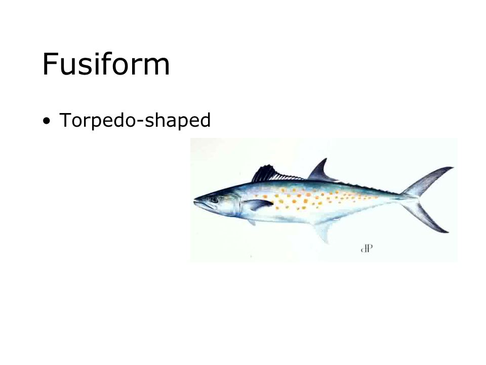 Fusiform Torpedo-shaped