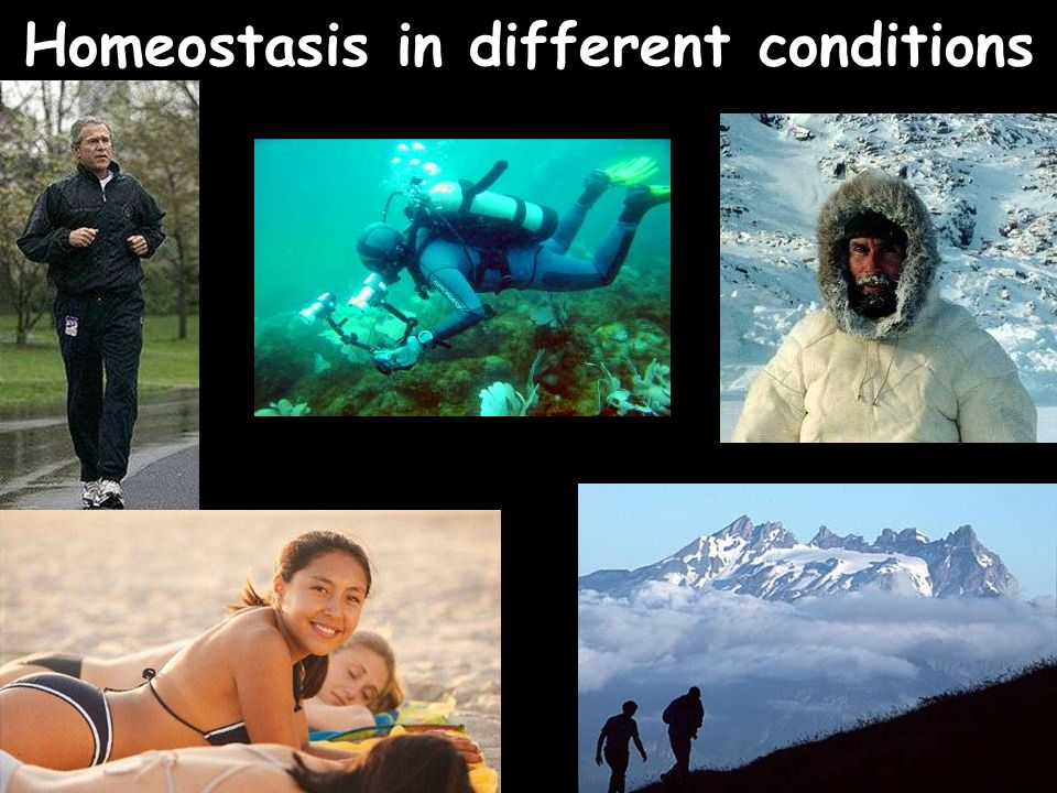 Homeostasis in different conditions